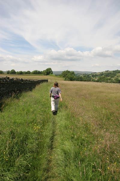 Hay Meadows in Teesdale