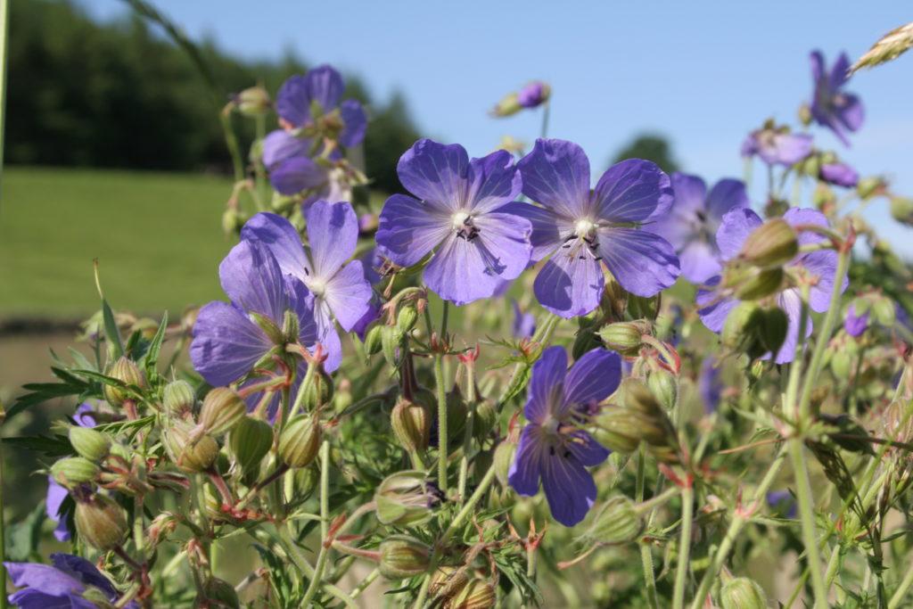 Hay meadows and grasslands image