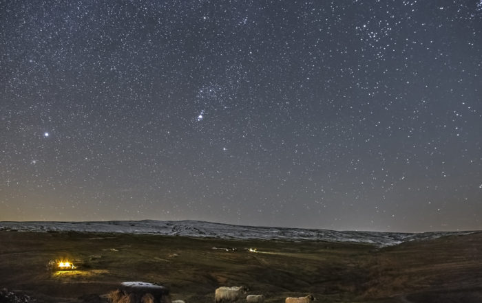 Sheep under a starry sky © Gary Lintern