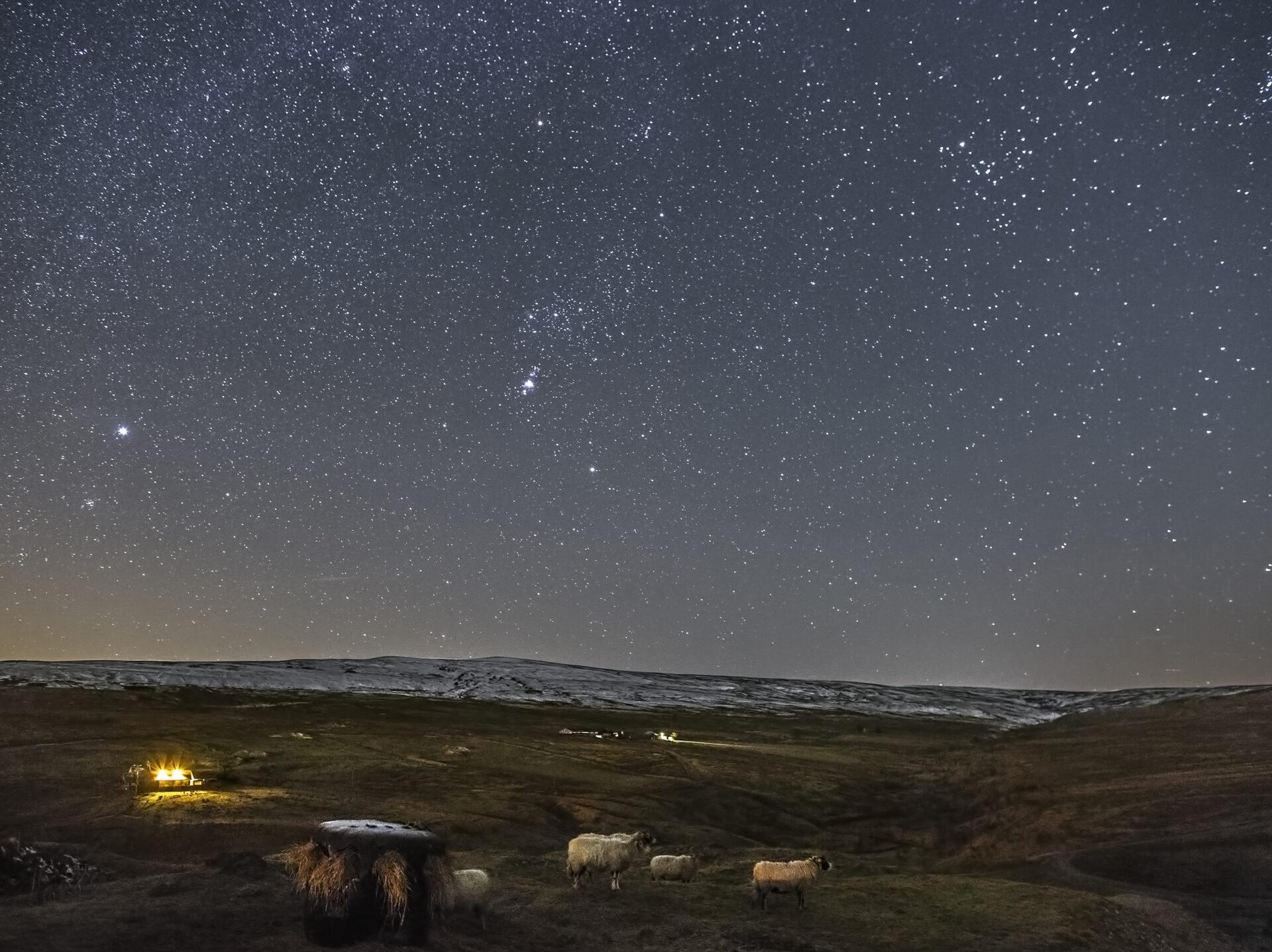 Sheep under a starry sky © Gary Lintern