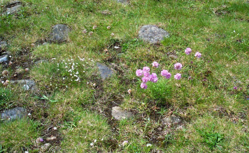 OREsome botany image