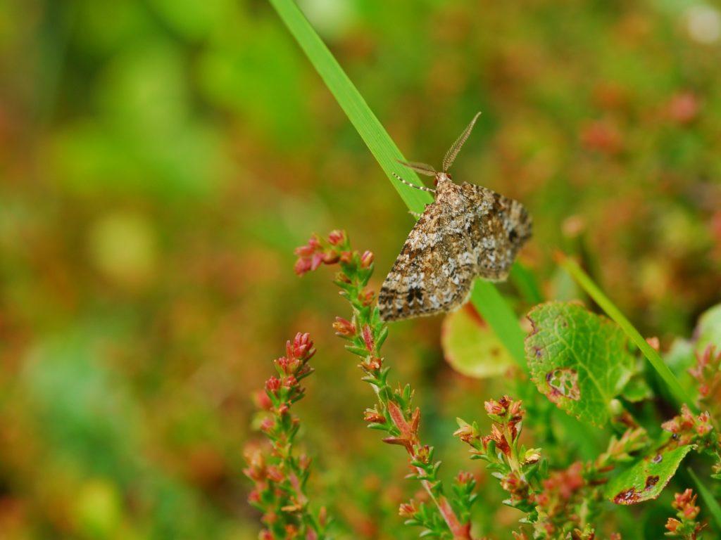 Special Invertebrate Sites image