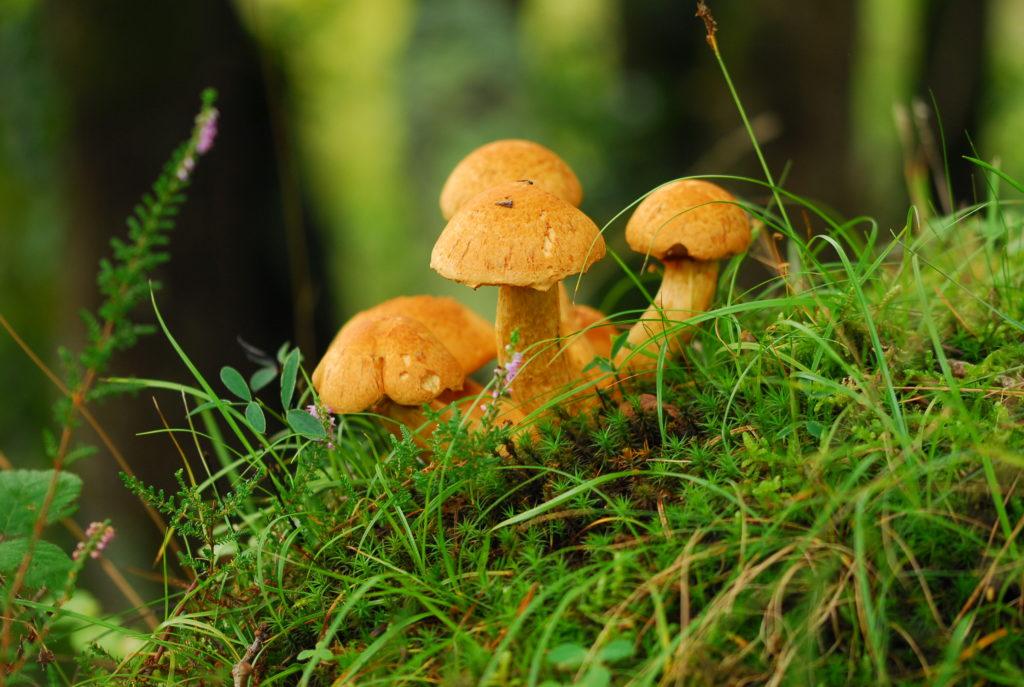 Plants & fungi image