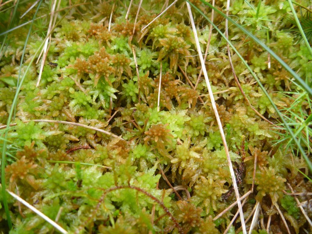 Re-vegetation growth image