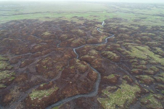 Peatlands are special image