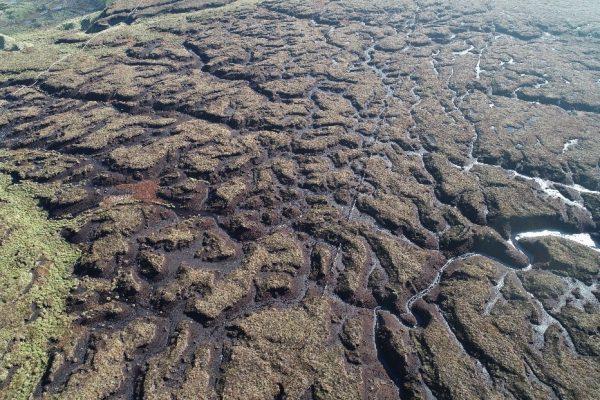 Peatland before restoration work