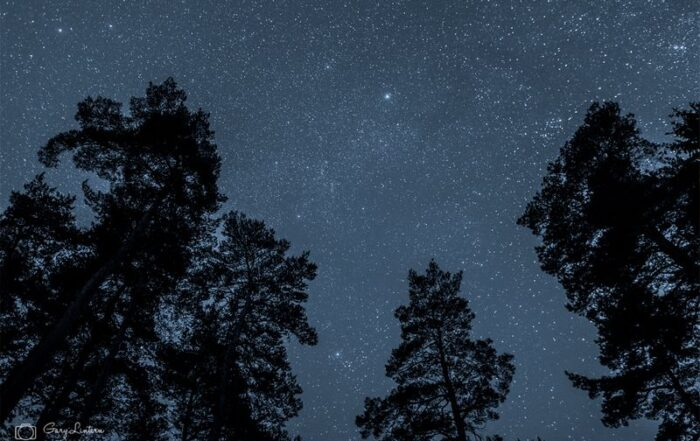 Image of stars above trees