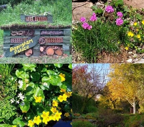 Collage of images of wildlife friendly gardens