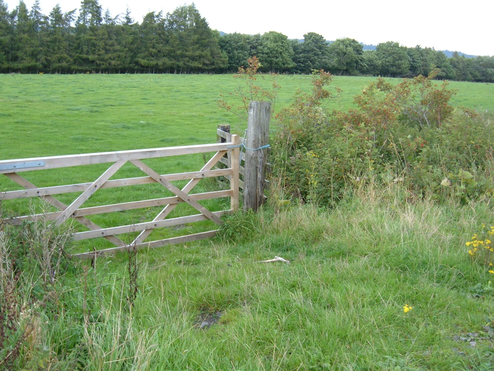 Image of hedges and a gate
