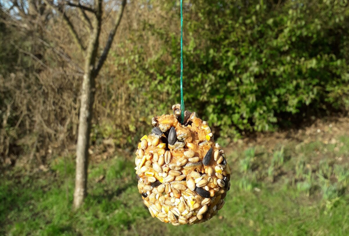 Picture of pine cone bird feeder hanging in front of a tree