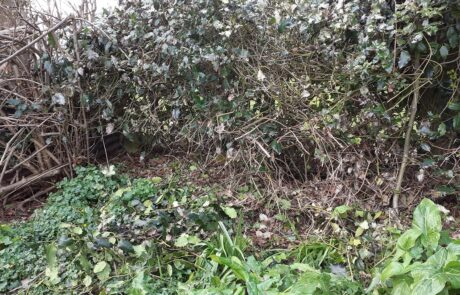 Image of wild corner of garden for insects and wildlife