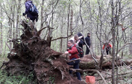 Image of children climbing a fallen tree in a wood