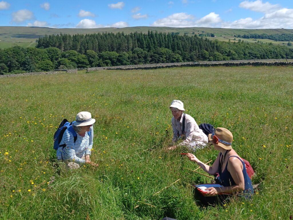 Tees-Swale hay meadow restoration image