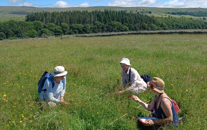 Volunteers doing hay meadow quadrat surveys Middle Farm in Teesdale on a summers day
